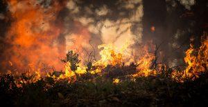 Ambiente, Geologia e dintorni, Rischi Incendi boschivi, una devastazione del territorio italiano