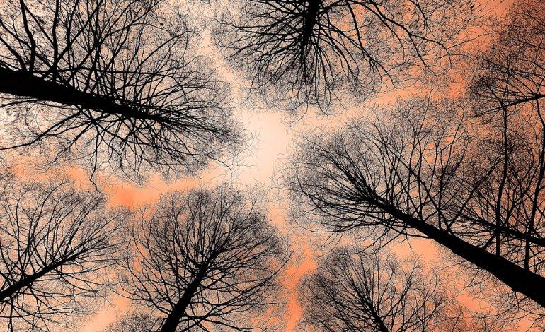 Progetto: L'albero magico, manifestazione a Boscoreale
